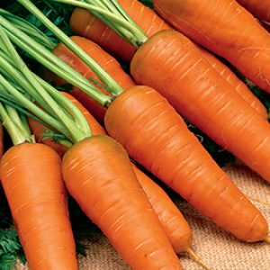 Carrot (per Heap)